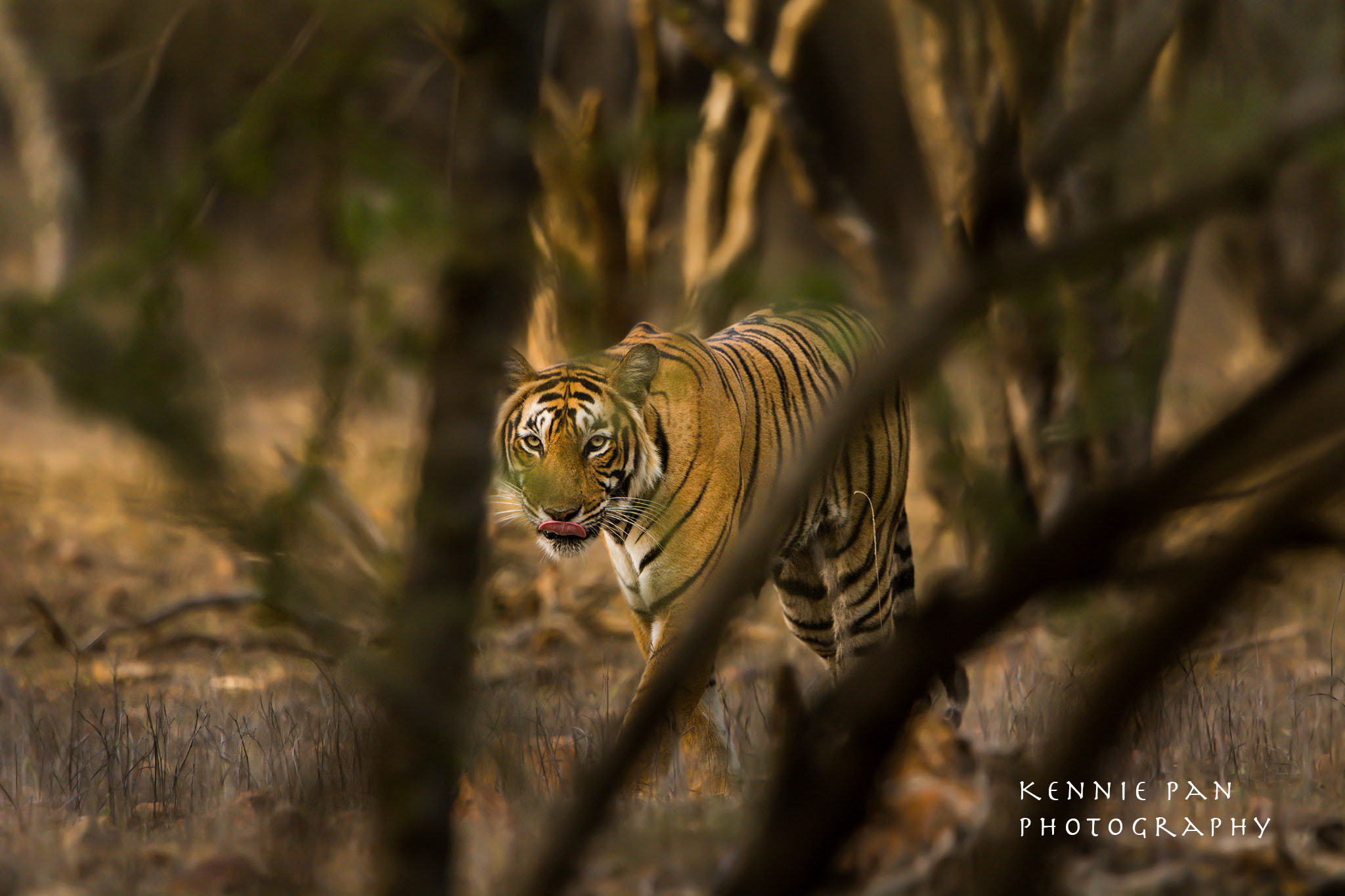 Ranthambore Tiger Photo Safari India